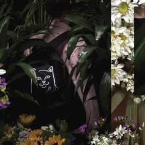 Rip N Dip Clothing / FALL 2017